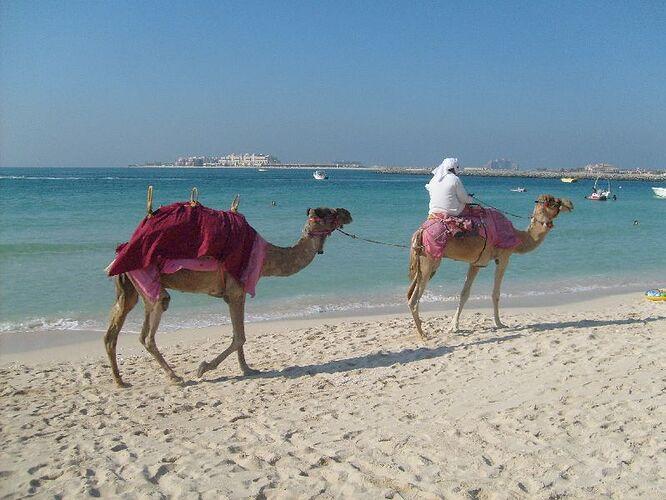 beach_kamel.jpg